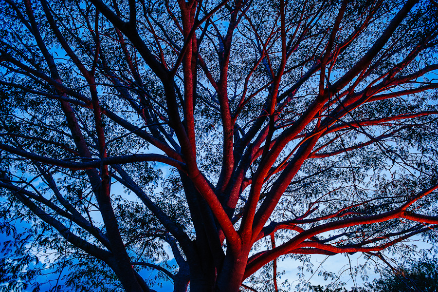 Gorgeous red tree in Hunxectaman against blue sky