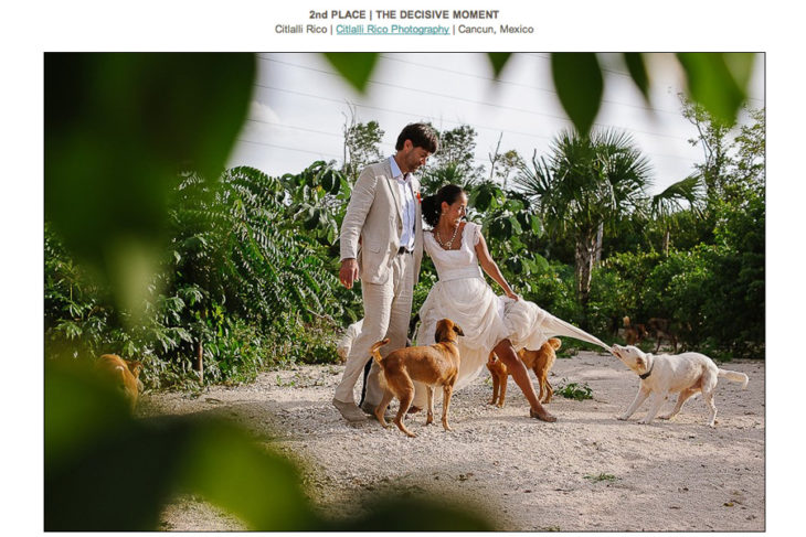 Groom helping bride because a dog is biting her dress during a trash the dress session in Tierra de Animales with dogs in Cancun Mexico