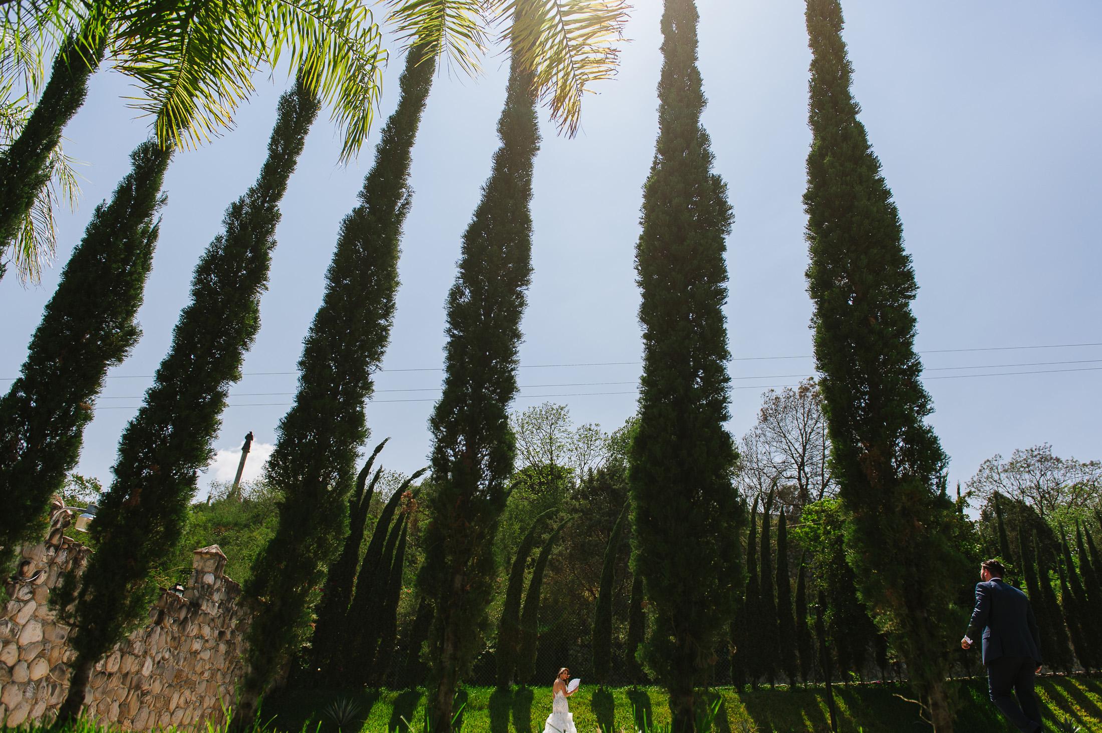 Bride & groom portrait by pine trees in Santiago Pueblo Mágico